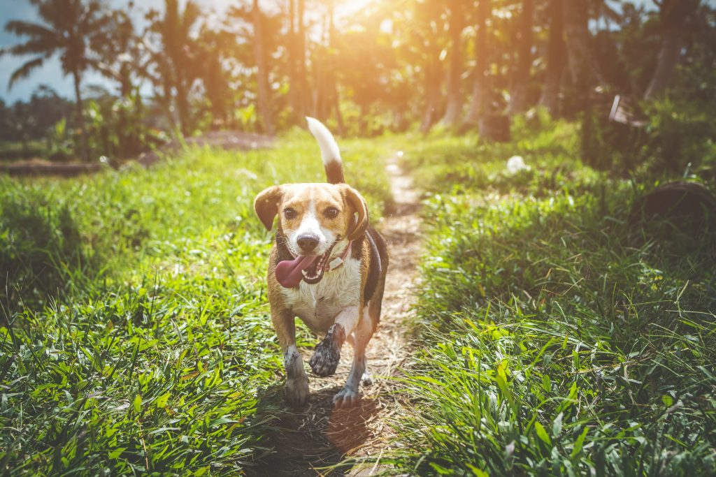 Diabetic Dog Food Guide: What to Feed a Dog With Canine Diabetes