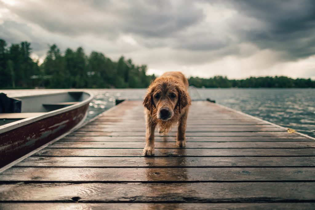 Dog Nutrition: Why Should You Feed Organic Pet Food?