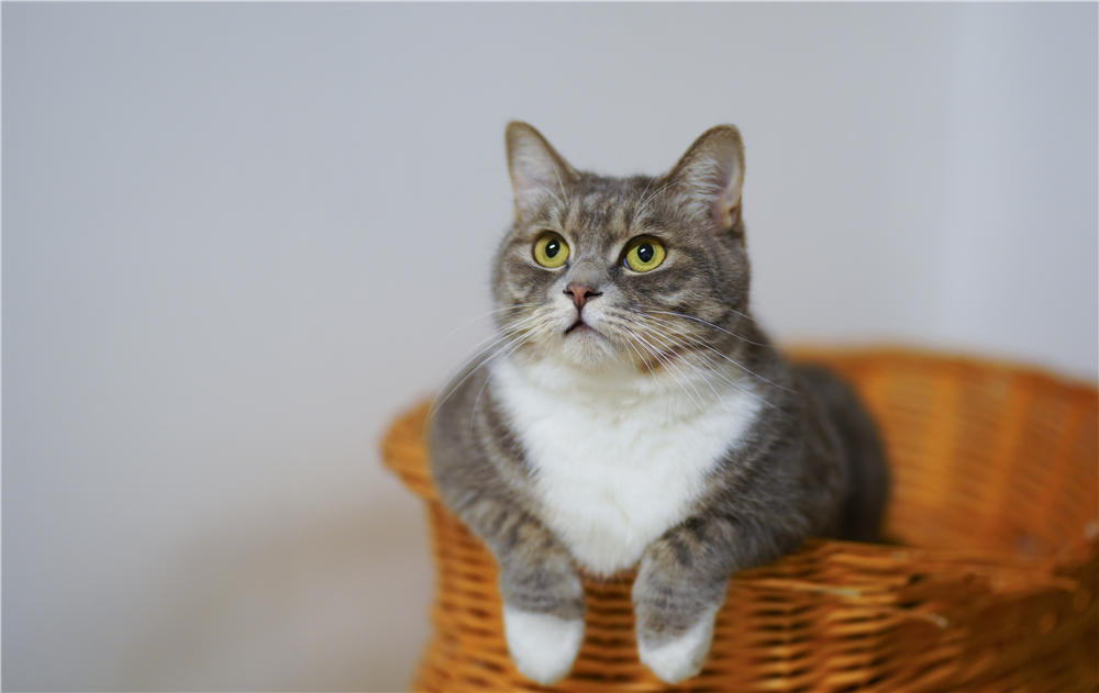 Do You Know How Much to Feed a Cat? The Definitive Guide to Cat Food Portions