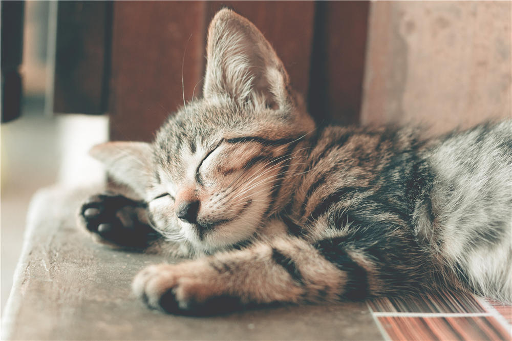 Do You Know How Much to Feed a Kitten? The Ultimate Guide to Kitten Food Portions