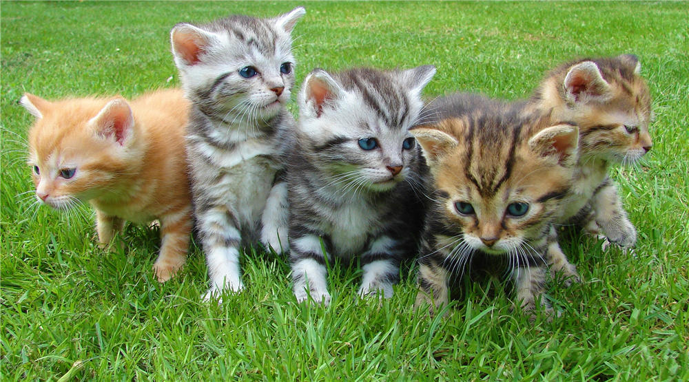 New Cat Parent's Guide on What To Feed Kittens From Birth To Adulthood