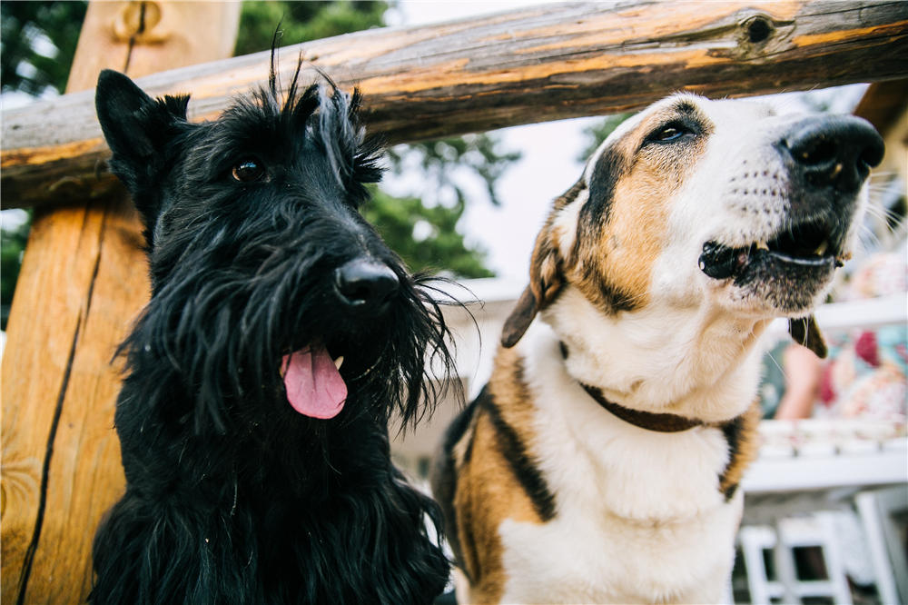 Your Guide to Dog Food Toppers: What They Are, Benefits and More