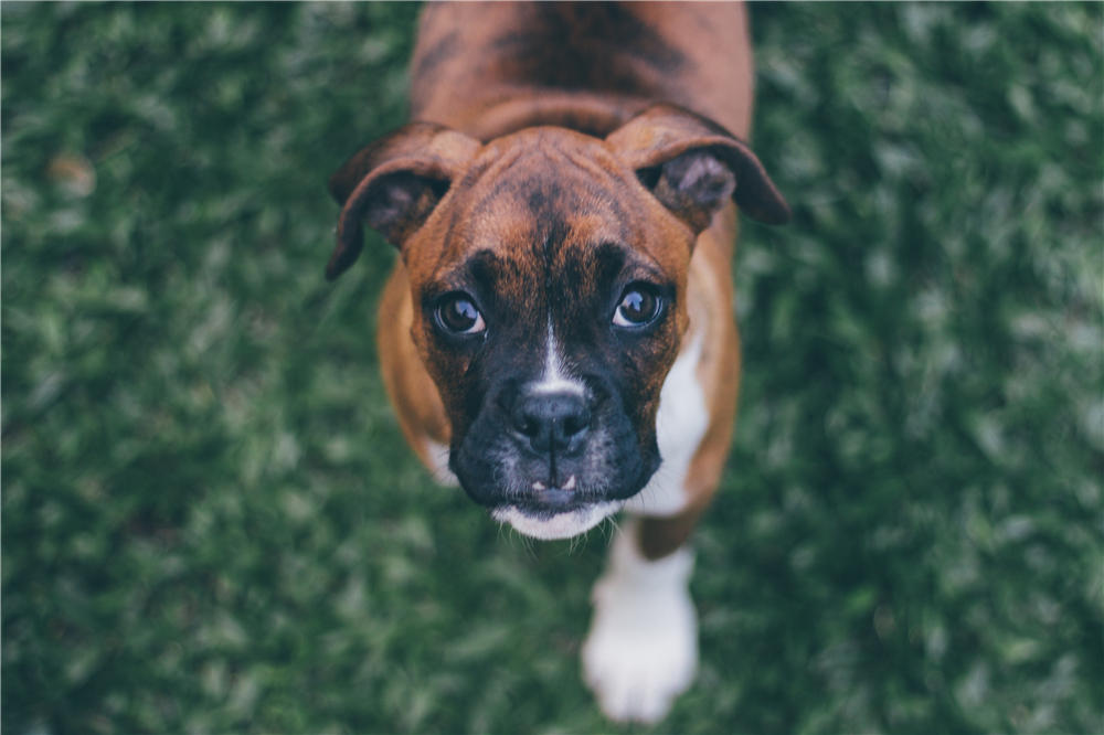 Your Guide to Frozen Dog Food: Safety, Benefits and More