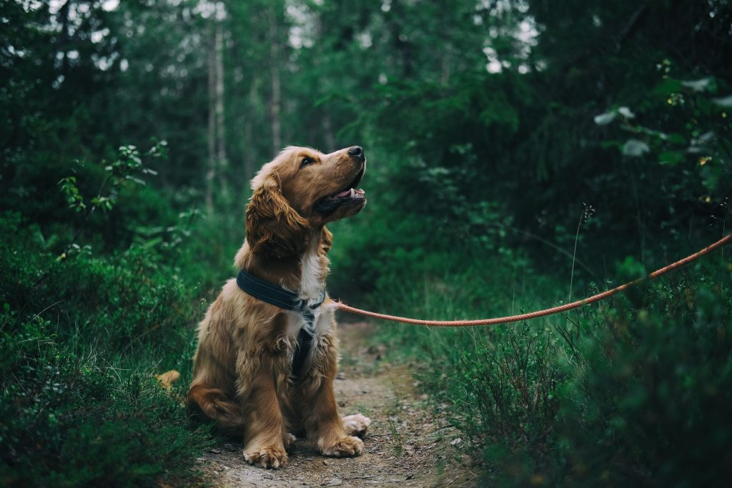 Is Cinnamon Safe for Dogs?