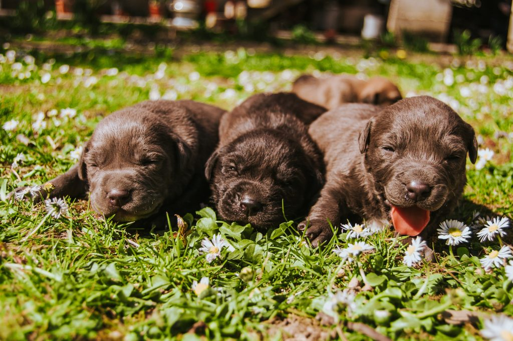 Food and Treats That Are Perfect for Your New Puppy