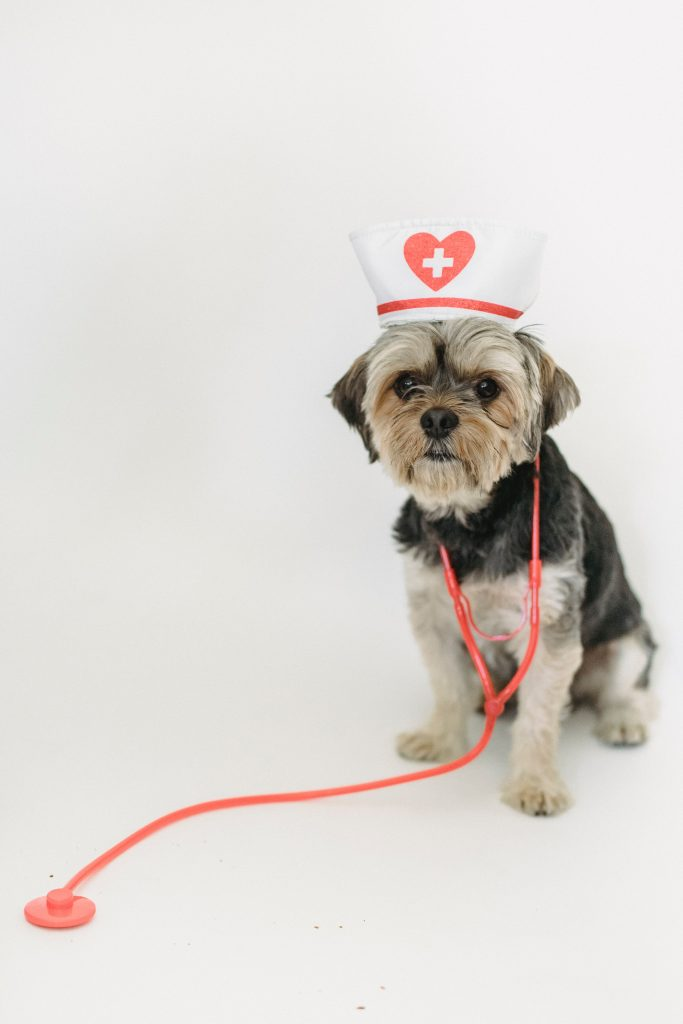 Do Dog Treats Have a Place in a Healthy Diet?