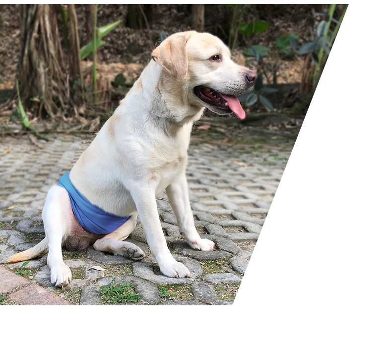 Washable Male Dog Belly Band Wrap Waterproof Male Pet Diapers