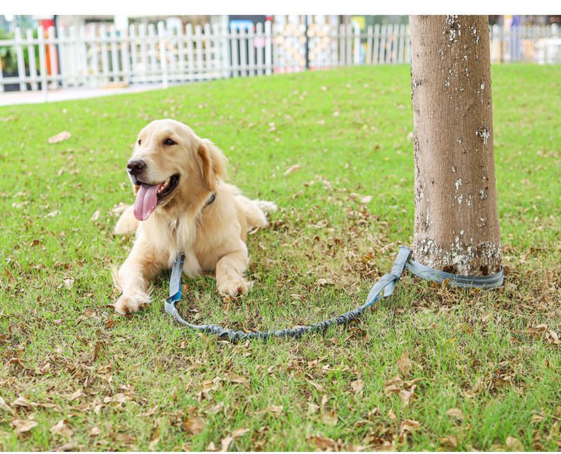 Upgraded leash dogs free hand ,Retractable Bungee hands free pet leash