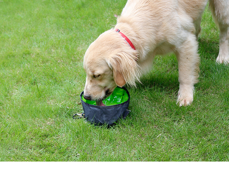 2020 New Arrival Folding Collapsible Portable Travel Food & Water Bowl For Pets Dogs Cats