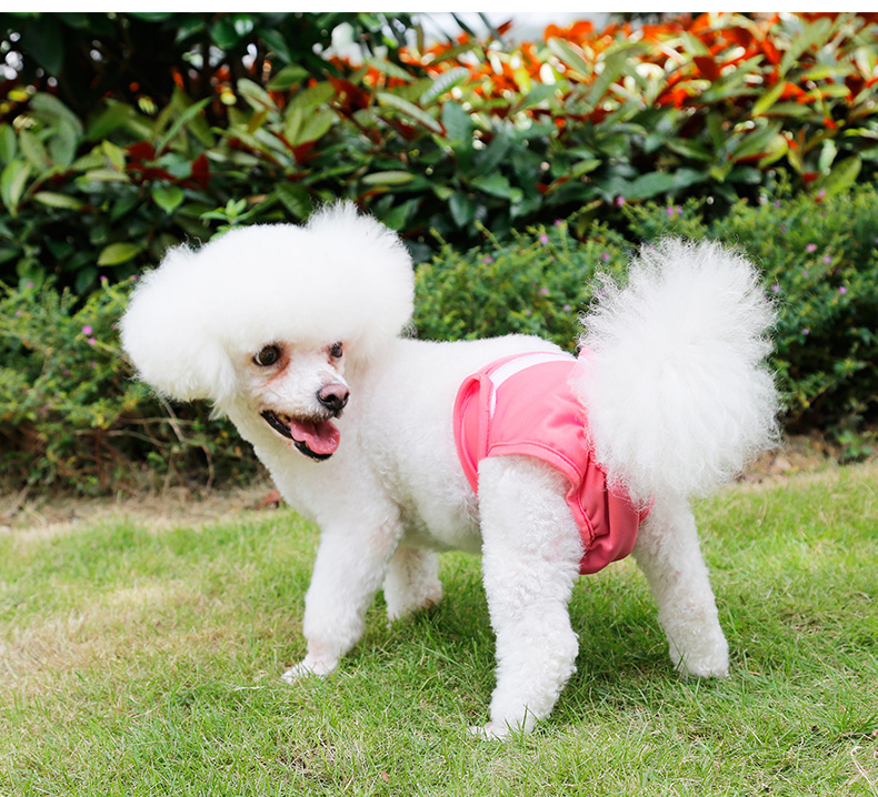 Reusable Female Dog Diapers Washable Dog Pants Underwear